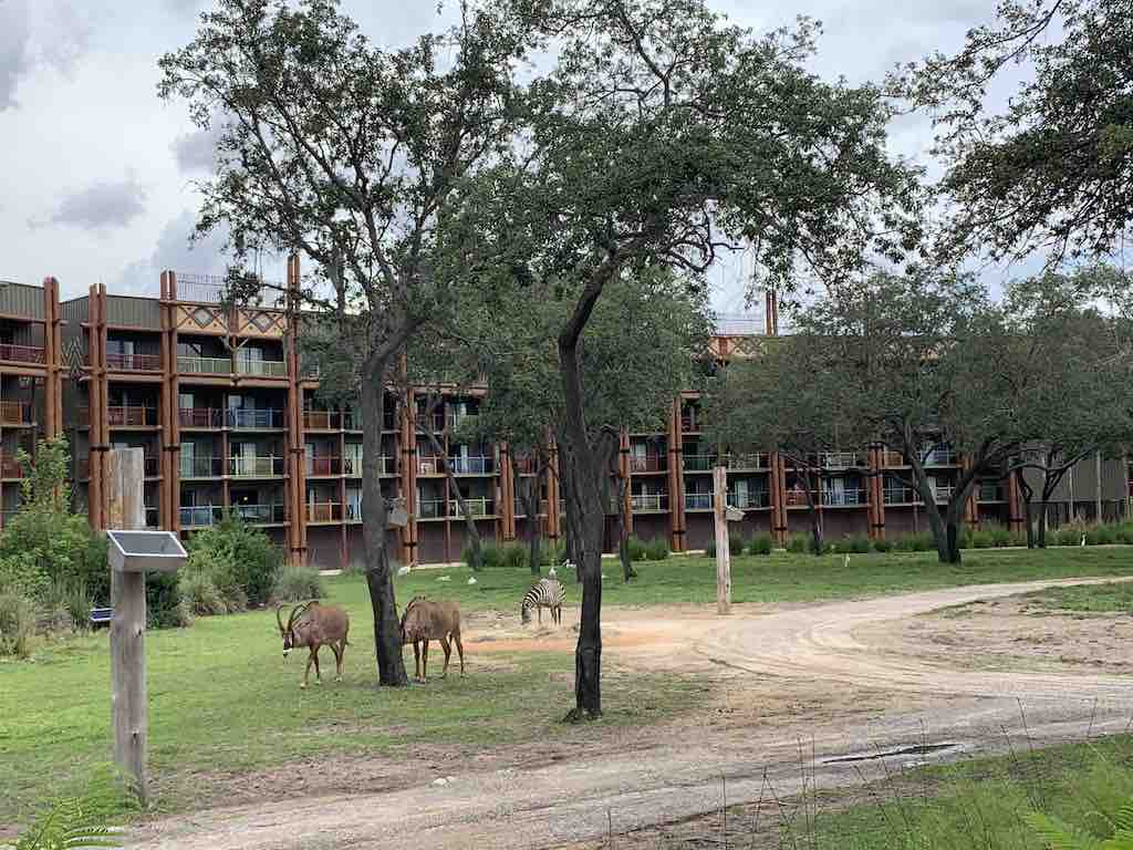 a view of the Animal Kingdom Lodge Jambo House with African animals on the savanna
